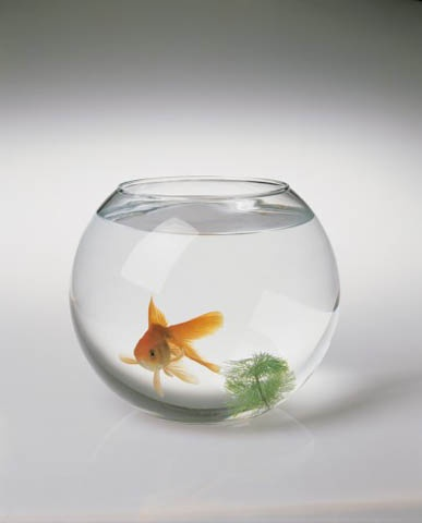советы начинающему аквариумисту, как ухаживать за аквариумом
