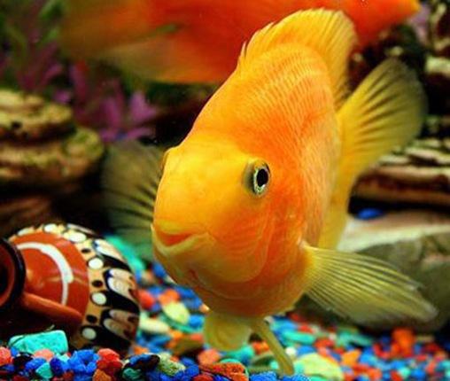 советы по уходу за аквариумом