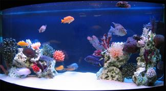 Советы по оформлению аквариума