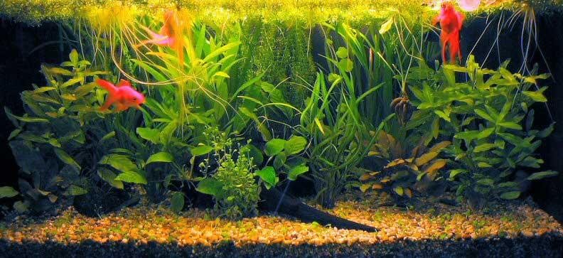 фото аквариум 100 литров