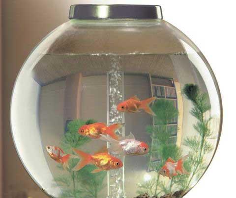 Задний фон аквариума своими руками фото