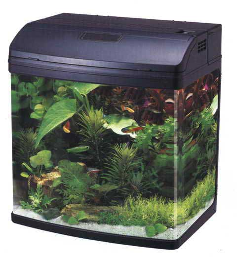 Аквариум 40 литров. Цена аквариума 40 литров, фото ...: http://aqua-mos.ru/akvarium-40-litrov