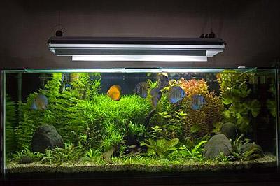 Led светильник для аквариума своими руками фото 830