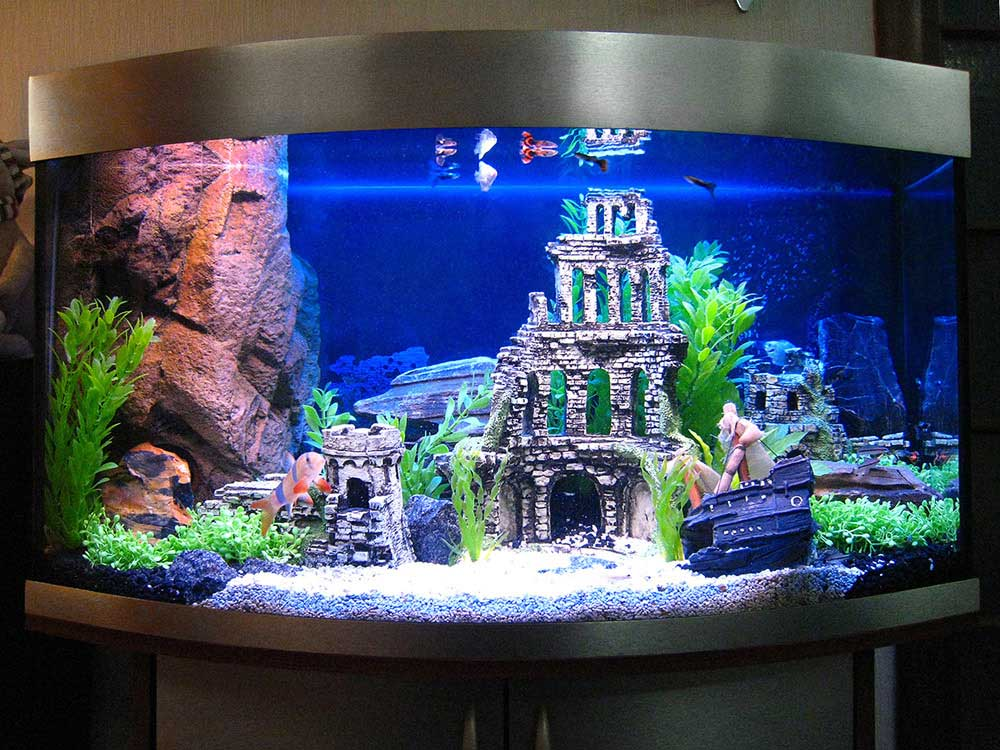 Дизайн домашний аквариум